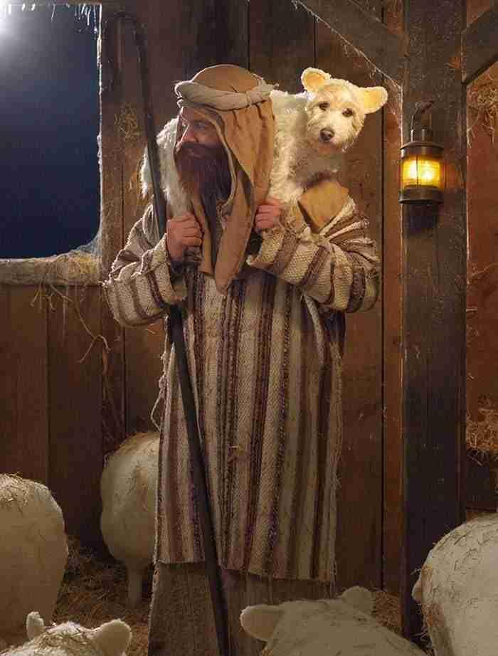 """1484859775 66 el dueno de este perro lo ha convertido en un perro modelo muy particular - El dueño de este perro lo ha convertido en un """"Perro modelo"""" muy particular…."""