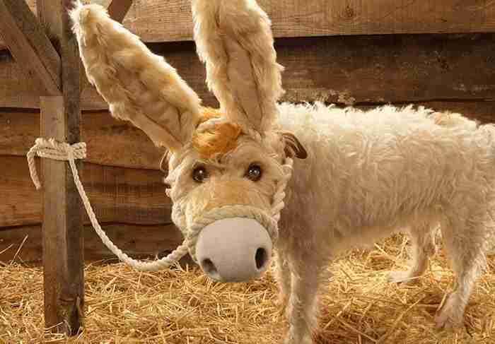 El dueño de este perro lo ha convertido en un Perro modelo muy particular.... 2