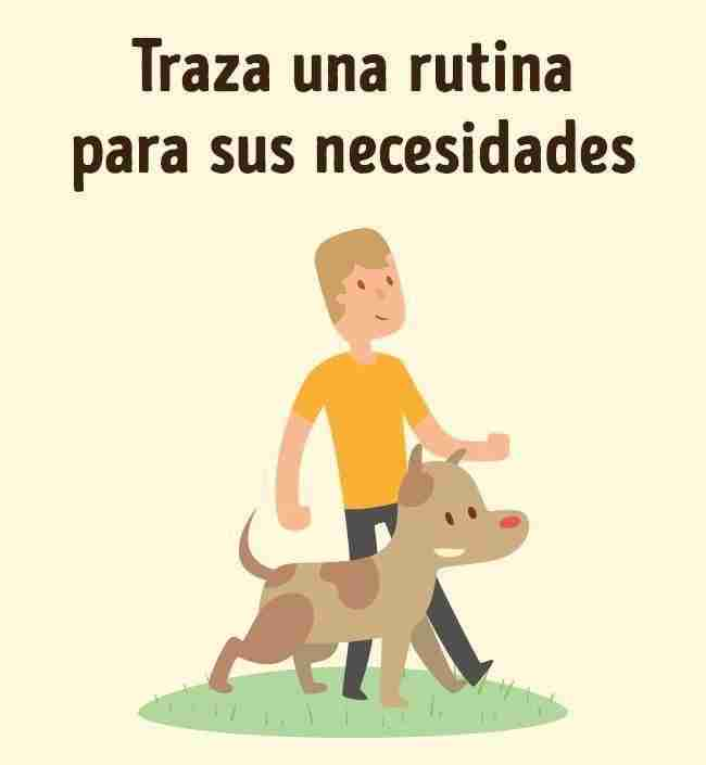 1486041471 796 como entrenar a tu perro como un experto - Cómo entrenar a tu perro como un experto