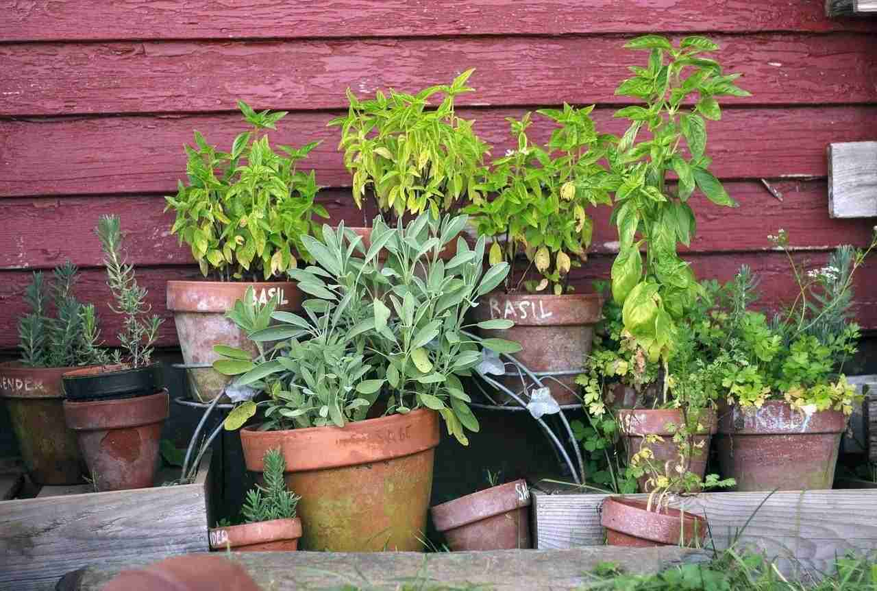 5 plantas medicinales que puedes cultivar en tu casa - Cultivar plantas aromaticas en casa ...