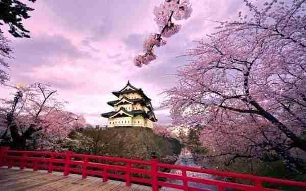 Flor De Cerezo En Japón Significado