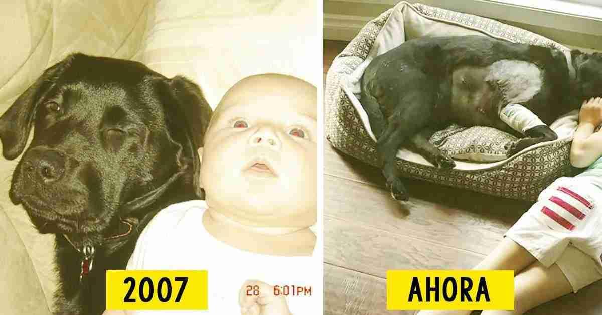 8 fotos que demuestran que adoptar un perro para tu beb es la mejor decisi n posible - Que colchon es mejor para un bebe ...