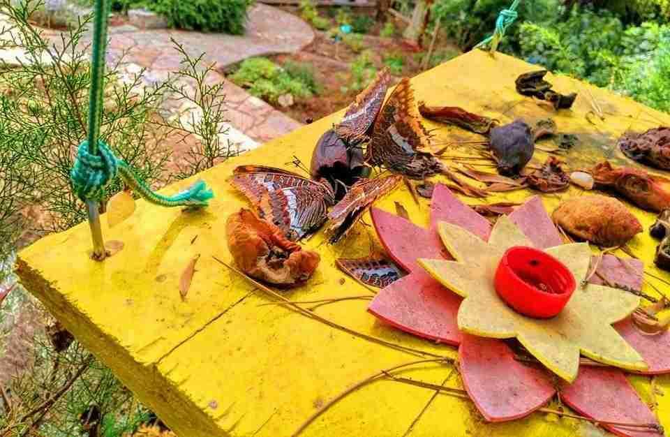Tabla de alimentaci n para mariposas decora tu jard n y for Decora tu jardin