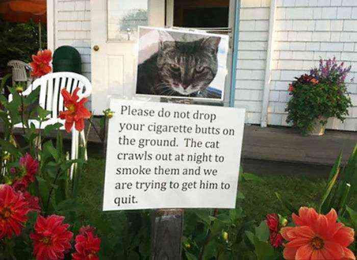 Por favor, no tiréis colillas en el suelo. El gato se escapa por la noche para fumárselas y estamos intentando que lo deje