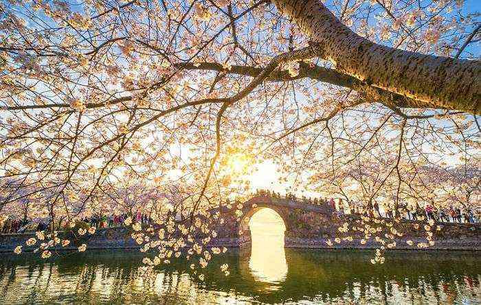 1521711141 405 han florecido los cerezos en china y probablemente sea uno de los paisajes mas increibles del planeta - Han florecido los cerezos en China, y probablemente sea uno de los paisajes más increíbles del planeta