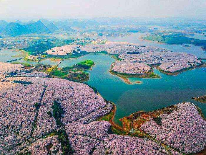 1521711141 642 han florecido los cerezos en china y probablemente sea uno de los paisajes mas increibles del planeta - Han florecido los cerezos en China, y probablemente sea uno de los paisajes más increíbles del planeta
