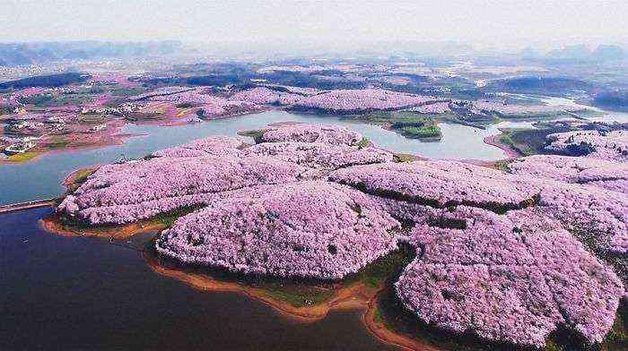 1521711142 154 han florecido los cerezos en china y probablemente sea uno de los paisajes mas increibles del planeta - Han florecido los cerezos en China, y probablemente sea uno de los paisajes más increíbles del planeta