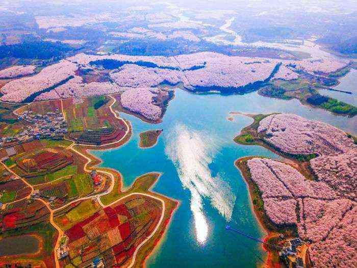 1521711142 262 han florecido los cerezos en china y probablemente sea uno de los paisajes mas increibles del planeta - Han florecido los cerezos en China, y probablemente sea uno de los paisajes más increíbles del planeta