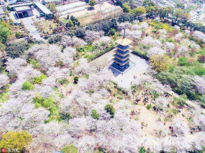 1521711142 396 han florecido los cerezos en china y probablemente sea uno de los paisajes mas increibles del planeta - Han florecido los cerezos en China, y probablemente sea uno de los paisajes más increíbles del planeta