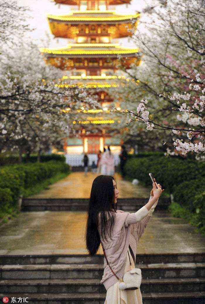 1521711142 47 han florecido los cerezos en china y probablemente sea uno de los paisajes mas increibles del planeta - Han florecido los cerezos en China, y probablemente sea uno de los paisajes más increíbles del planeta