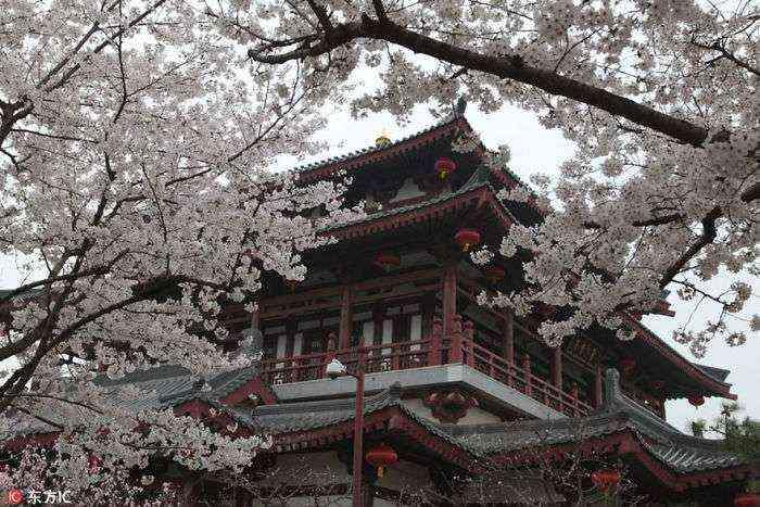 1521711142 526 han florecido los cerezos en china y probablemente sea uno de los paisajes mas increibles del planeta - Han florecido los cerezos en China, y probablemente sea uno de los paisajes más increíbles del planeta