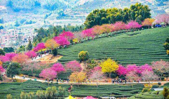 1521711142 552 han florecido los cerezos en china y probablemente sea uno de los paisajes mas increibles del planeta - Han florecido los cerezos en China, y probablemente sea uno de los paisajes más increíbles del planeta