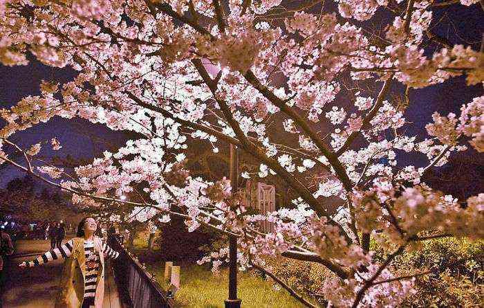 1521711142 796 han florecido los cerezos en china y probablemente sea uno de los paisajes mas increibles del planeta - Han florecido los cerezos en China, y probablemente sea uno de los paisajes más increíbles del planeta