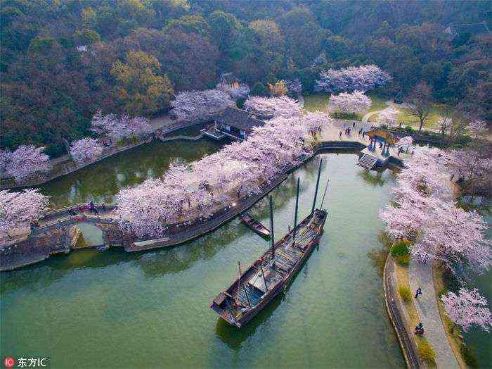 1521711142 974 han florecido los cerezos en china y probablemente sea uno de los paisajes mas increibles del planeta - Han florecido los cerezos en China, y probablemente sea uno de los paisajes más increíbles del planeta