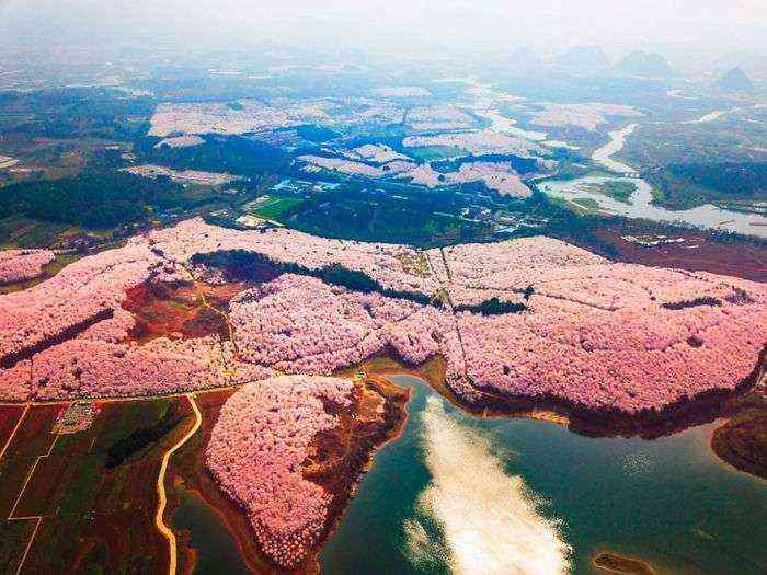 1521711143 256 han florecido los cerezos en china y probablemente sea uno de los paisajes mas increibles del planeta - Han florecido los cerezos en China, y probablemente sea uno de los paisajes más increíbles del planeta