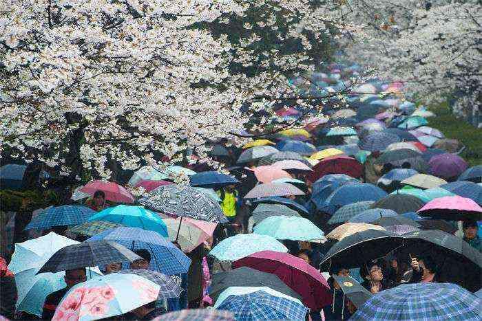 1521711143 310 han florecido los cerezos en china y probablemente sea uno de los paisajes mas increibles del planeta - Han florecido los cerezos en China, y probablemente sea uno de los paisajes más increíbles del planeta