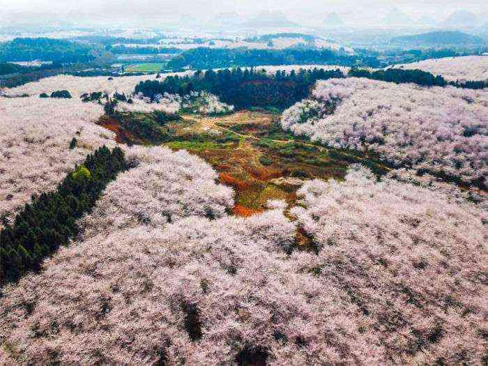 1521711143 828 han florecido los cerezos en china y probablemente sea uno de los paisajes mas increibles del planeta - Han florecido los cerezos en China, y probablemente sea uno de los paisajes más increíbles del planeta