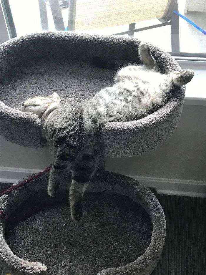 Gato cascada