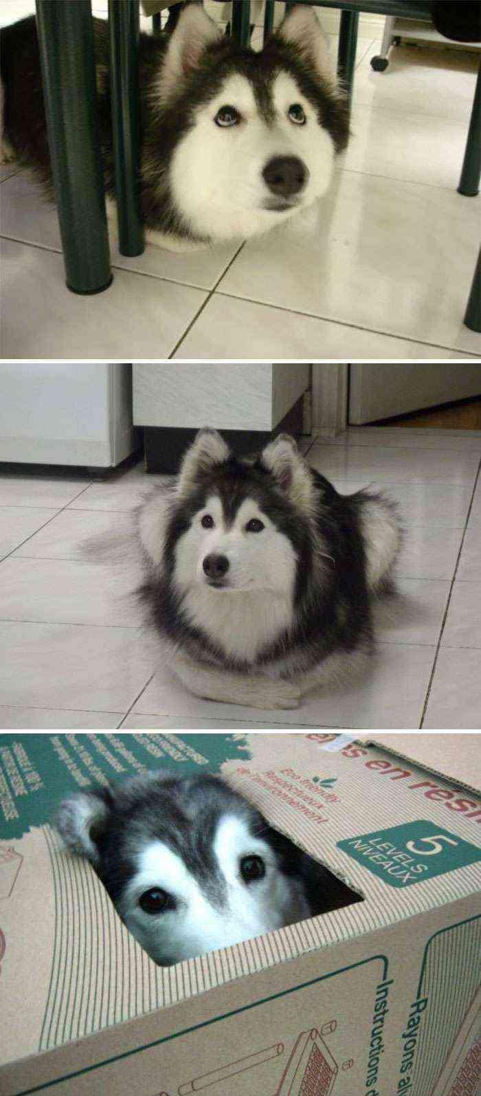 Fue criado por gatos, así que actúa como ellos