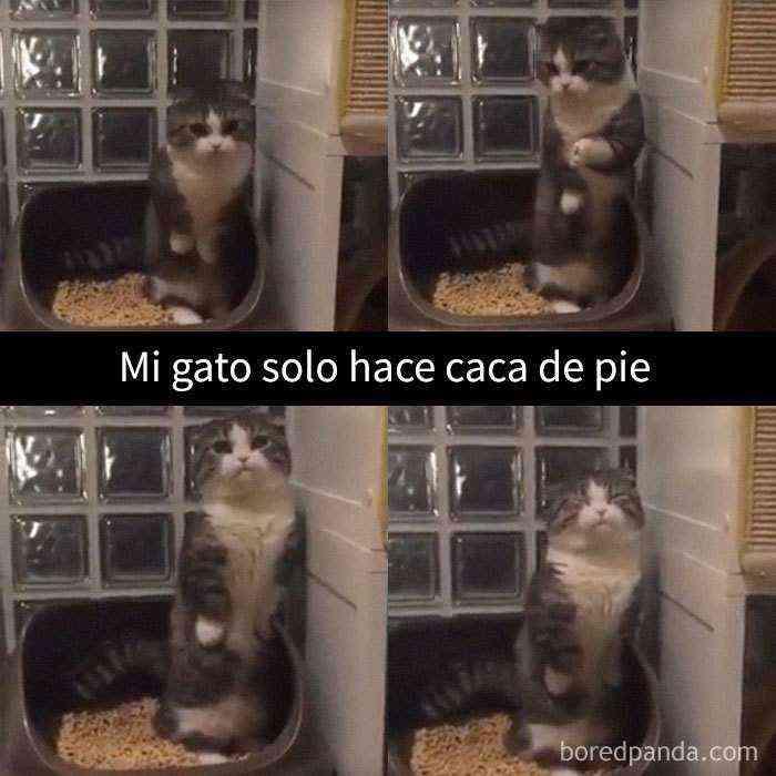 1527857618 483 25 divertidos snapchats de gatos que te sacaran una gran sonrisa nuevas imagenes - 25 Divertidos snapchats de gatos que te sacarán una gran sonrisa (Nuevas imágenes)