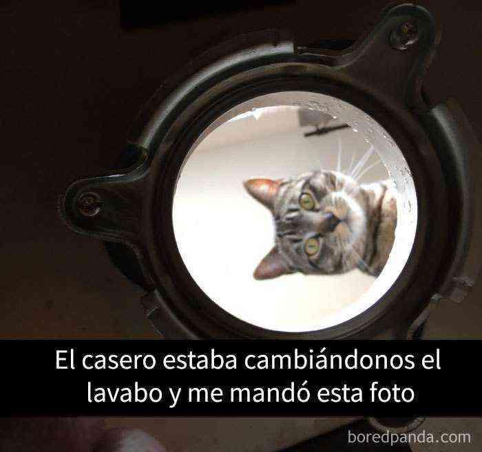 1527857618 562 25 divertidos snapchats de gatos que te sacaran una gran sonrisa nuevas imagenes - 25 Divertidos snapchats de gatos que te sacarán una gran sonrisa (Nuevas imágenes)