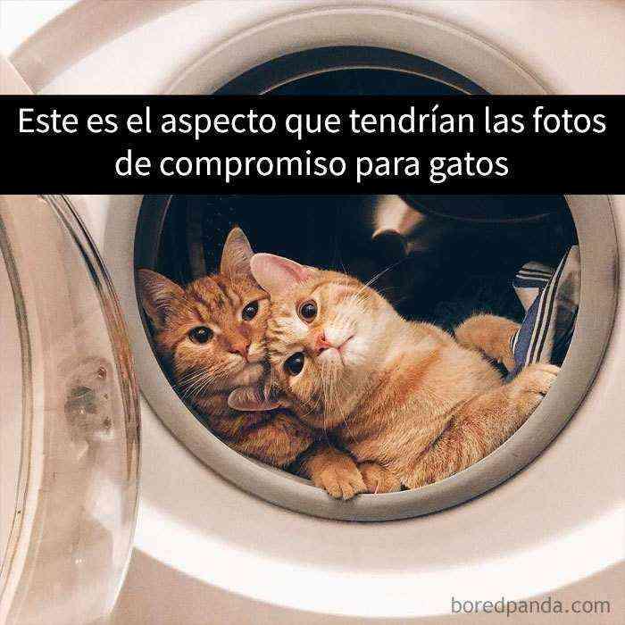 1527857618 5 25 divertidos snapchats de gatos que te sacaran una gran sonrisa nuevas imagenes - 25 Divertidos snapchats de gatos que te sacarán una gran sonrisa (Nuevas imágenes)