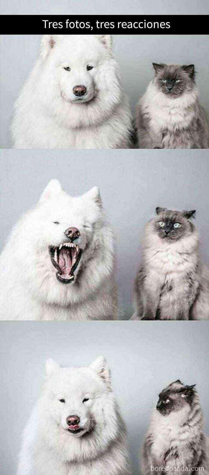 1527857618 779 25 divertidos snapchats de gatos que te sacaran una gran sonrisa nuevas imagenes - 25 Divertidos snapchats de gatos que te sacarán una gran sonrisa (Nuevas imágenes)