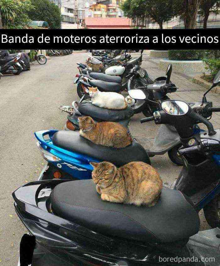 1527857619 181 25 divertidos snapchats de gatos que te sacaran una gran sonrisa nuevas imagenes - 25 Divertidos snapchats de gatos que te sacarán una gran sonrisa (Nuevas imágenes)