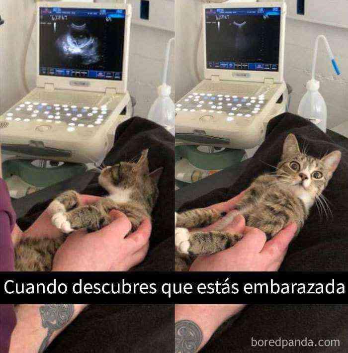 1527857619 378 25 divertidos snapchats de gatos que te sacaran una gran sonrisa nuevas imagenes - 25 Divertidos snapchats de gatos que te sacarán una gran sonrisa (Nuevas imágenes)
