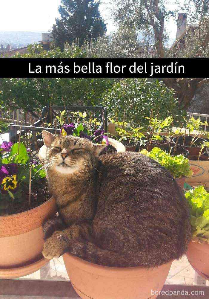 1527857619 41 25 divertidos snapchats de gatos que te sacaran una gran sonrisa nuevas imagenes - 25 Divertidos snapchats de gatos que te sacarán una gran sonrisa (Nuevas imágenes)