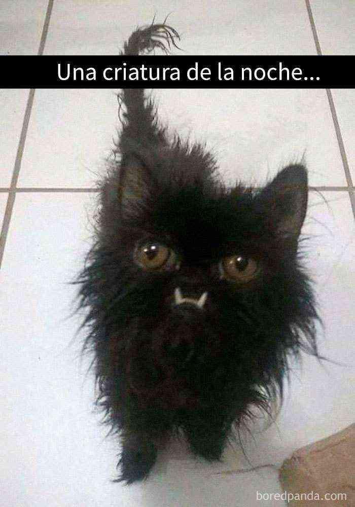 1527857619 66 25 divertidos snapchats de gatos que te sacaran una gran sonrisa nuevas imagenes - 25 Divertidos snapchats de gatos que te sacarán una gran sonrisa (Nuevas imágenes)