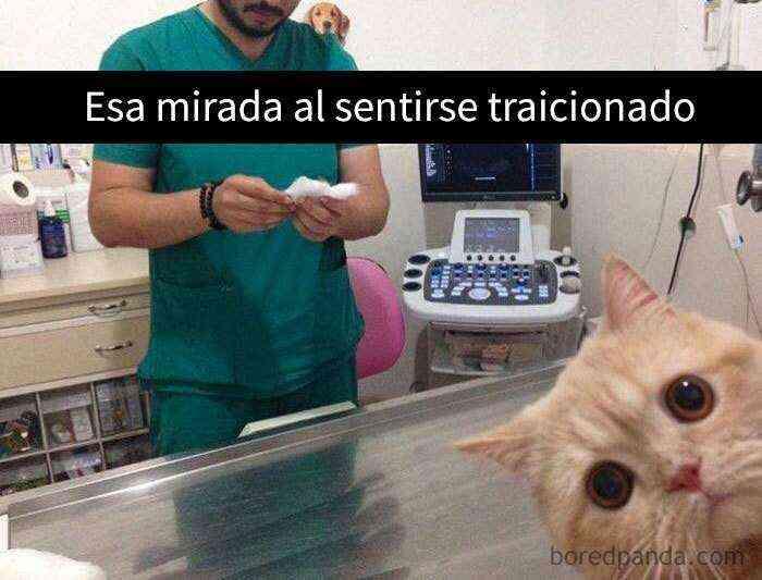 1527857619 681 25 divertidos snapchats de gatos que te sacaran una gran sonrisa nuevas imagenes - 25 Divertidos snapchats de gatos que te sacarán una gran sonrisa (Nuevas imágenes)
