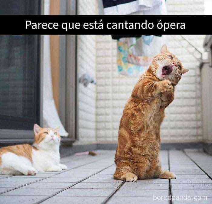 1527857619 690 25 divertidos snapchats de gatos que te sacaran una gran sonrisa nuevas imagenes - 25 Divertidos snapchats de gatos que te sacarán una gran sonrisa (Nuevas imágenes)