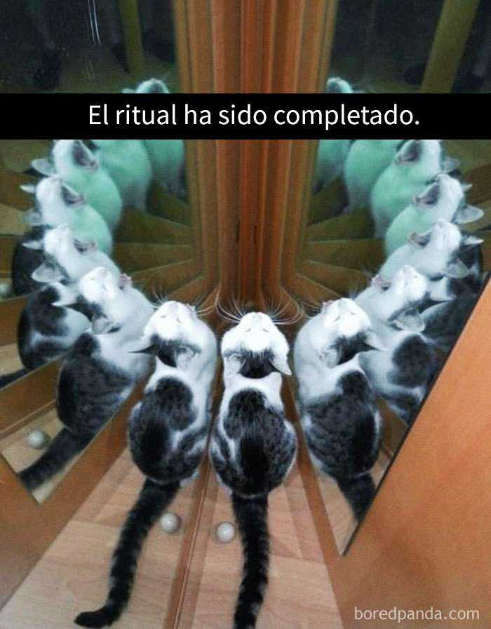 1527857619 742 25 divertidos snapchats de gatos que te sacaran una gran sonrisa nuevas imagenes - 25 Divertidos snapchats de gatos que te sacarán una gran sonrisa (Nuevas imágenes)