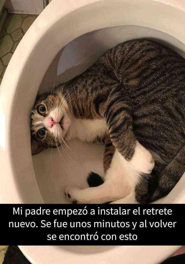 1527857619 792 25 divertidos snapchats de gatos que te sacaran una gran sonrisa nuevas imagenes - 25 Divertidos snapchats de gatos que te sacarán una gran sonrisa (Nuevas imágenes)