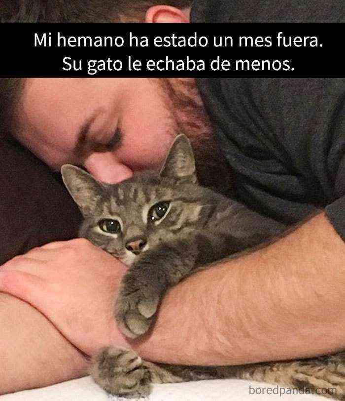 1527857619 835 25 divertidos snapchats de gatos que te sacaran una gran sonrisa nuevas imagenes - 25 Divertidos snapchats de gatos que te sacarán una gran sonrisa (Nuevas imágenes)