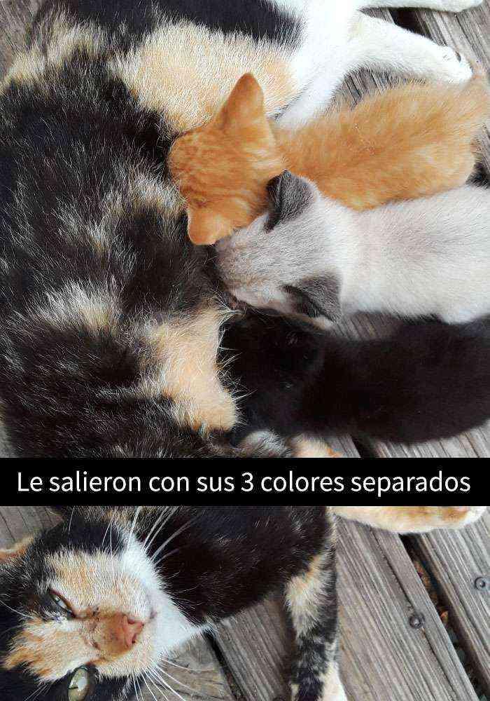 1527857619 90 25 divertidos snapchats de gatos que te sacaran una gran sonrisa nuevas imagenes - 25 Divertidos snapchats de gatos que te sacarán una gran sonrisa (Nuevas imágenes)