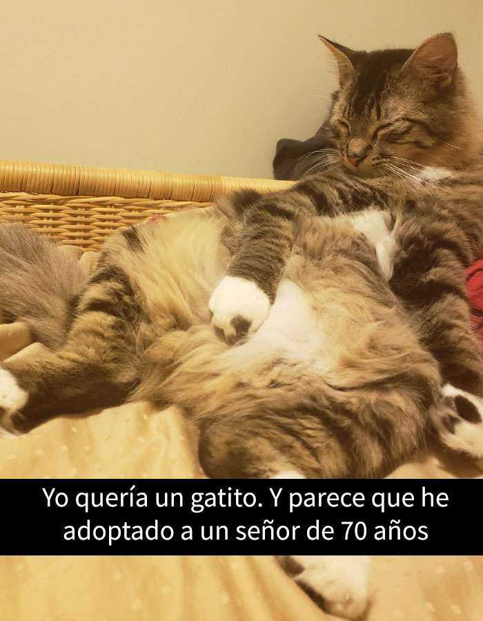 1527857620 10 25 divertidos snapchats de gatos que te sacaran una gran sonrisa nuevas imagenes - 25 Divertidos snapchats de gatos que te sacarán una gran sonrisa (Nuevas imágenes)