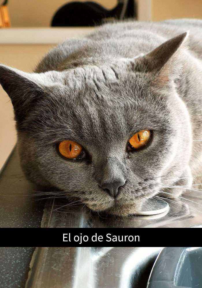 1527857620 278 25 divertidos snapchats de gatos que te sacaran una gran sonrisa nuevas imagenes - 25 Divertidos snapchats de gatos que te sacarán una gran sonrisa (Nuevas imágenes)