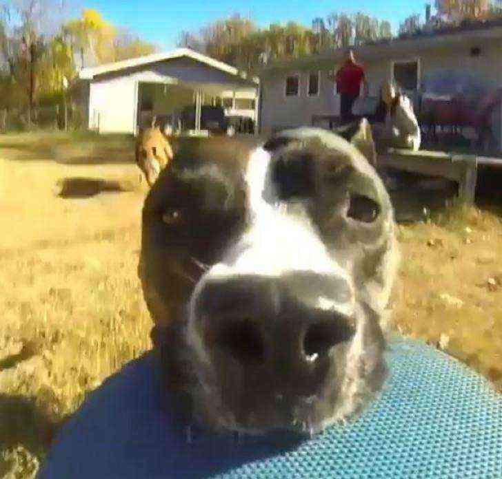 1533367013 869 perro roba una camara y huye a toda velocidad sin saberlo graba toda su hazana en divertido video - Perro roba una cámara y huye a toda velocidad. Sin saberlo, graba toda su hazaña en divertido video
