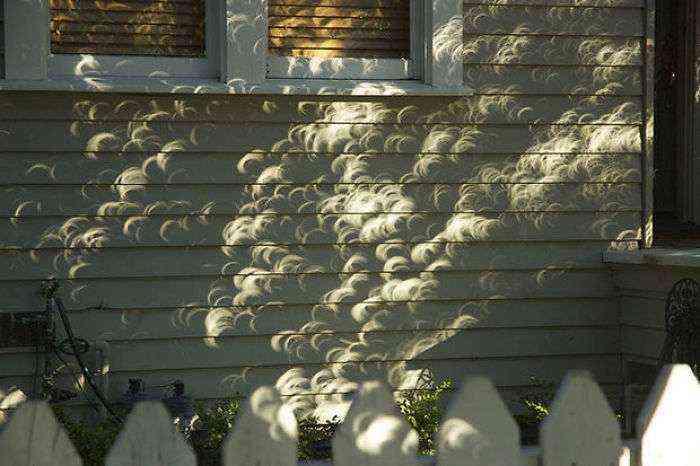 Sombras de las hojas de un árbol durante un eclipse solar