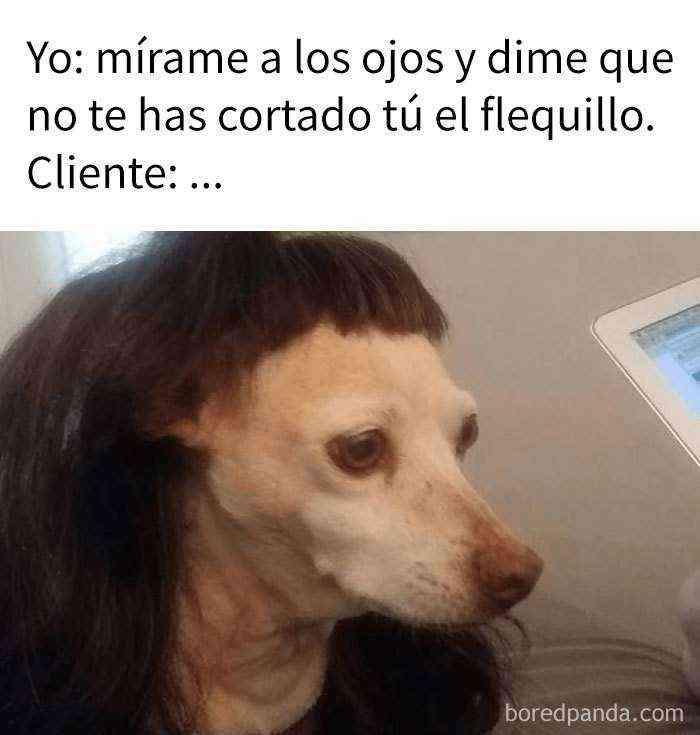1536315184 59 10 divertidos memes que te haran sentir pena por tu peluquera - 10+ Divertidos memes que te harán sentir pena por tu peluquera