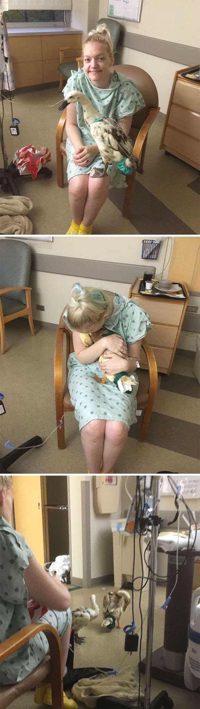Tenía Una Enfermedad Peligrosa, Pero No Quería Ir Al Hospital Porque Mis Patos Requerían Medicación Y Solo Se Fiaban De Mi. Las Enfermeras Dejaron Que Mi Marido Los Colara Por La Noche