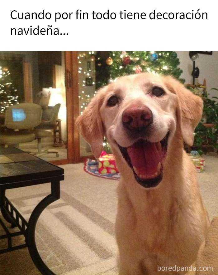 1543504893 43 20 divertidos memes navidenos - 20 Divertidos memes navideños