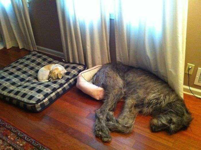Pues tendré que dormir aquí