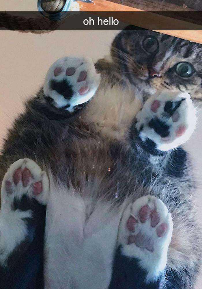1547632834 349 40 divertidas razones por las que los duenos de gatos deberian tener mesas de cristal - 40 Divertidas razones por las que los dueños de gatos deberían tener mesas de cristal