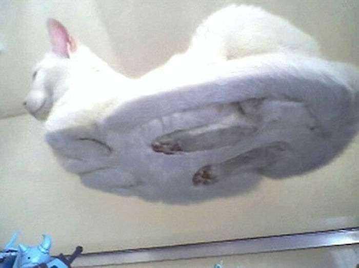 1547632834 386 40 divertidas razones por las que los duenos de gatos deberian tener mesas de cristal - 40 Divertidas razones por las que los dueños de gatos deberían tener mesas de cristal