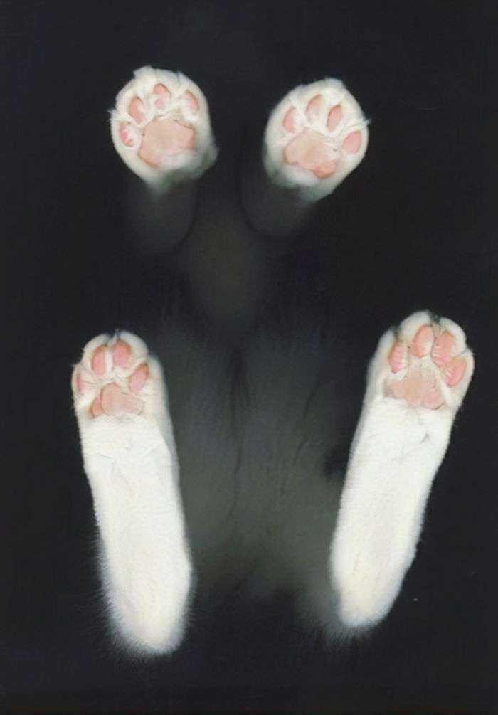 1547632834 425 40 divertidas razones por las que los duenos de gatos deberian tener mesas de cristal - 40 Divertidas razones por las que los dueños de gatos deberían tener mesas de cristal