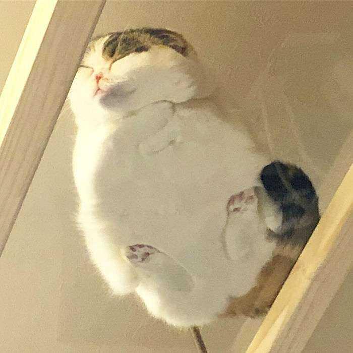 1547632834 426 40 divertidas razones por las que los duenos de gatos deberian tener mesas de cristal - 40 Divertidas razones por las que los dueños de gatos deberían tener mesas de cristal