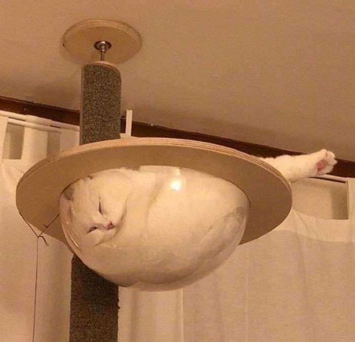 1547632834 520 40 divertidas razones por las que los duenos de gatos deberian tener mesas de cristal - 40 Divertidas razones por las que los dueños de gatos deberían tener mesas de cristal